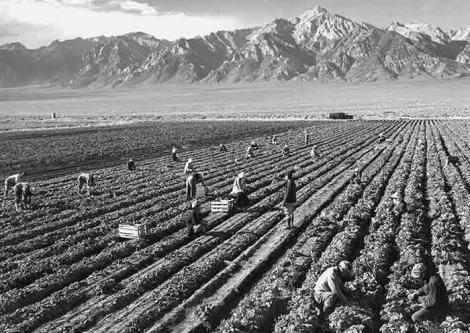 Ansel Adams, Potato Field, 1943. Gelatin silver print (printed 1984). Private collection; courtesy of Photographic Traveling Exhibitions.